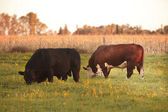 Argentina logró la reapertura del mercado para exportar genética bovina a Uruguay