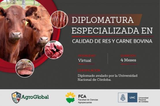 Diplomatura en Calidad de res y carne bovina: últimos días de descuento por preinscripción